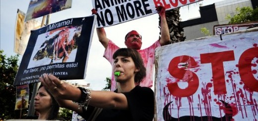Bull fighting activists